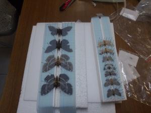 蛾類調查及標本製作